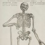 腱鞘の解剖学(5)ー腱鞘炎のメカニズムの詳細へ