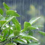 梅雨時の演奏にちなんでの詳細へ