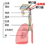 扁桃腺(へんとうせん)で起きていた管楽器奏者の鼻抜けの詳細へ