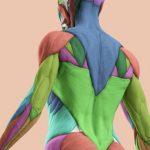 手の動きを肩甲骨の可動性で調整するの詳細へ