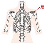 肩峰(けんぽう)の位置で呼吸が変わる?の詳細へ
