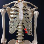 お腹のツボと呼吸の関係の詳細へ