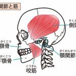 金管楽器奏者のアンブシュア不調と側頭筋・咬筋の緊張の詳細へ