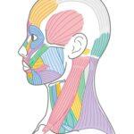 ある頚椎とアンブシュア不調の関係の詳細へ